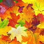 fall colored leaves